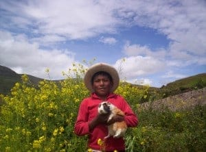 Julber & his cuy in Apurimac, Peru