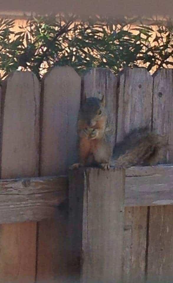 Appreciative Squirrel