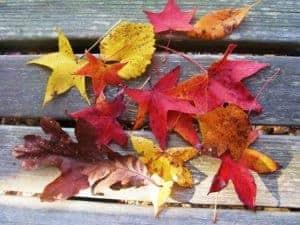 I love fall !