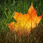 Fall Leaves Activities