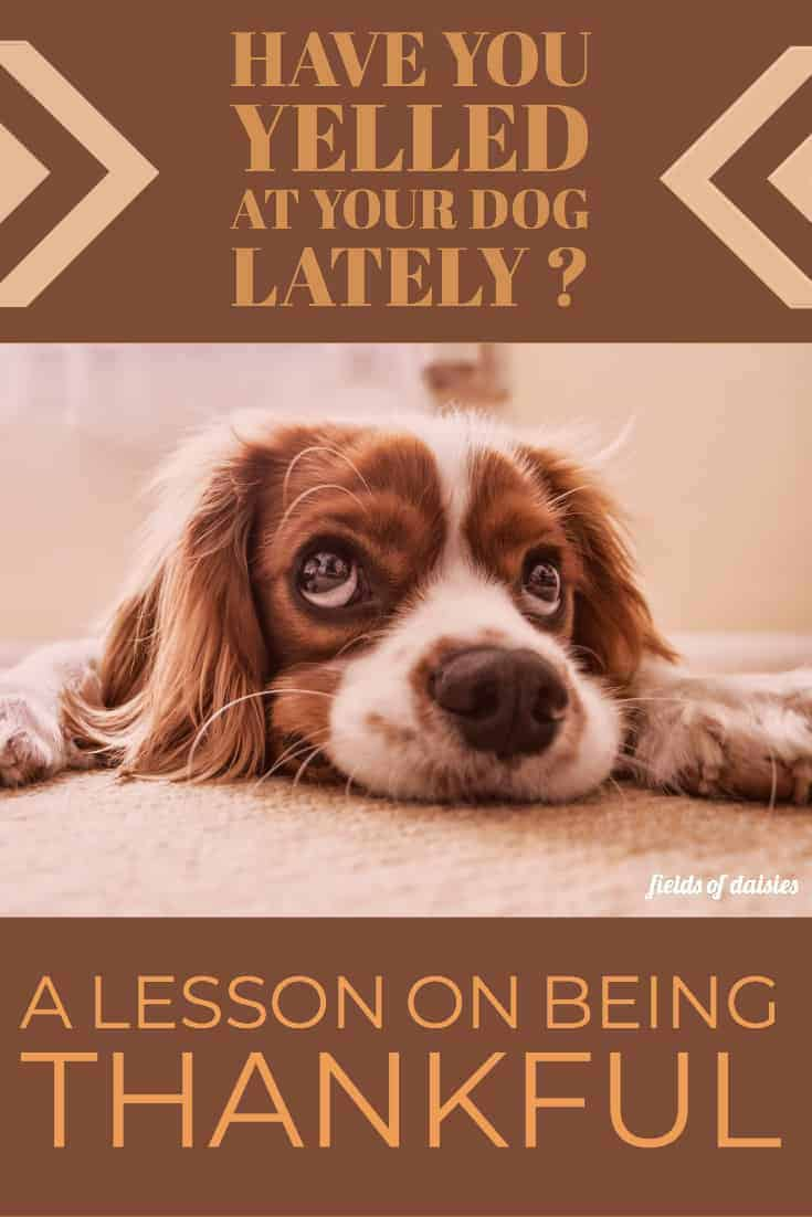 My Dog and a lesson on Thankfulness