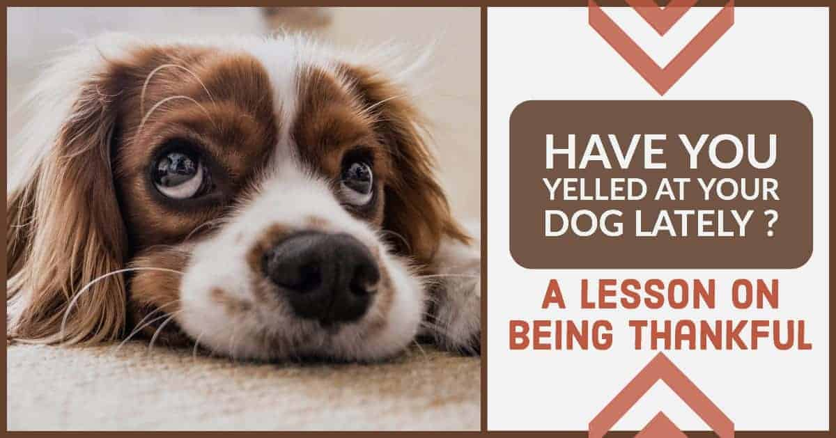 Yell at your dog much? A Lesson on Thankfulness