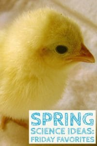 baby chick spring science ideas