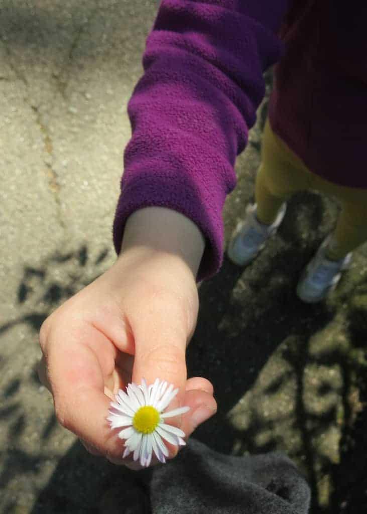 Look, a daisy!