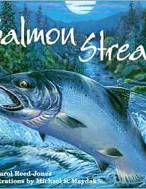 Salmon Stream
