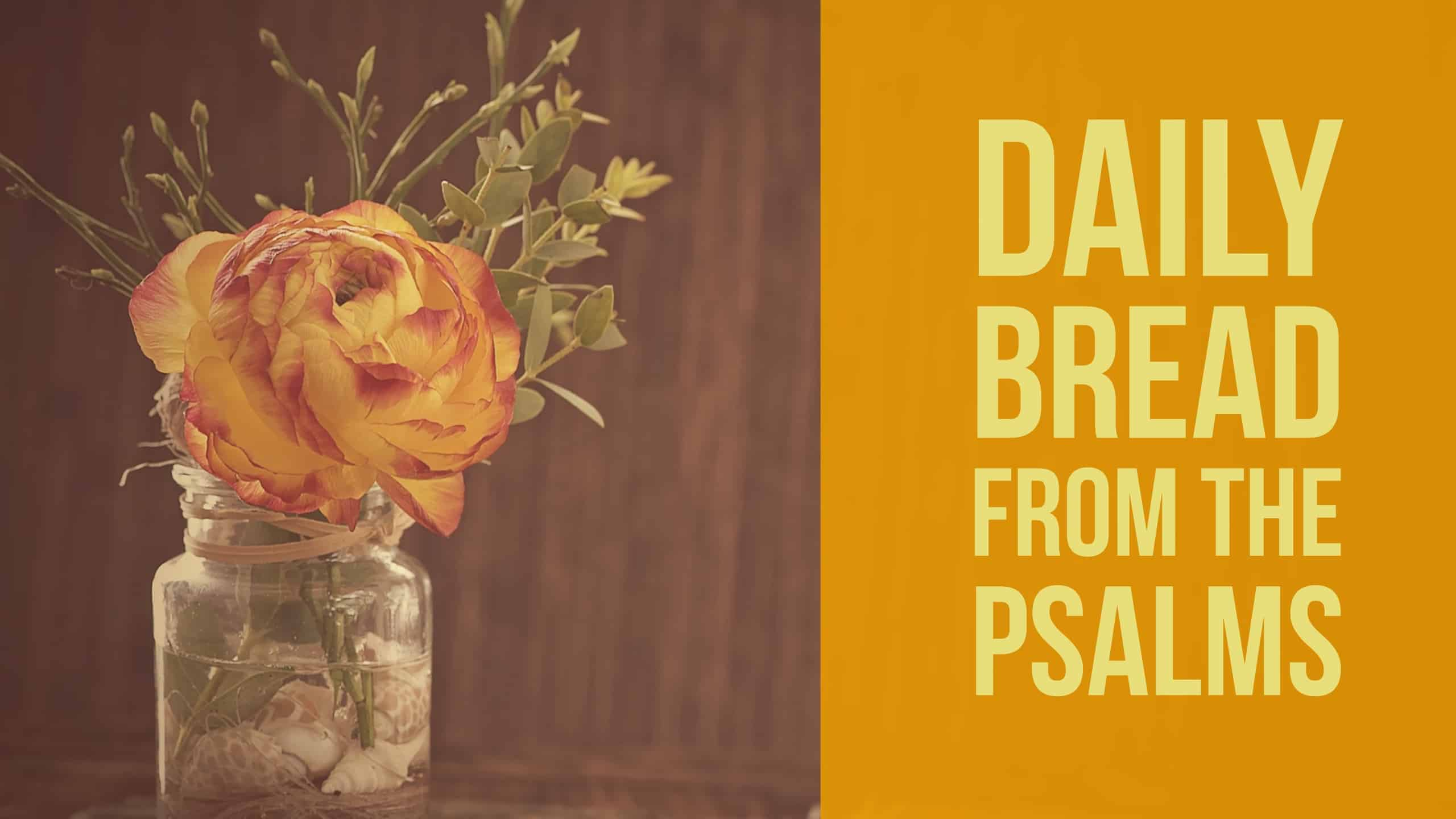 Daily Bread Psalm 4