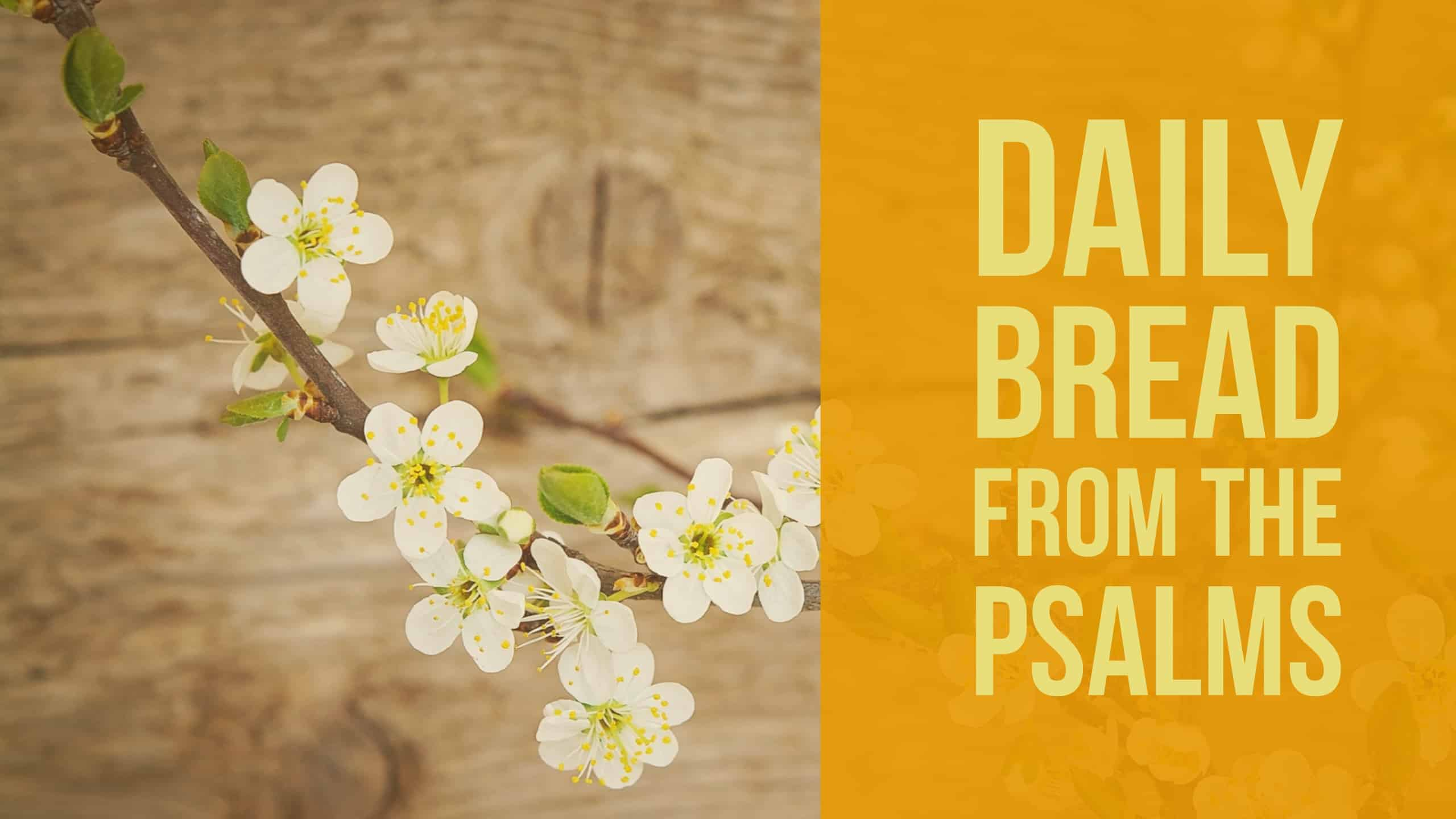 Daily Bread:  Thoughts and Prayers from the Book of Psalms