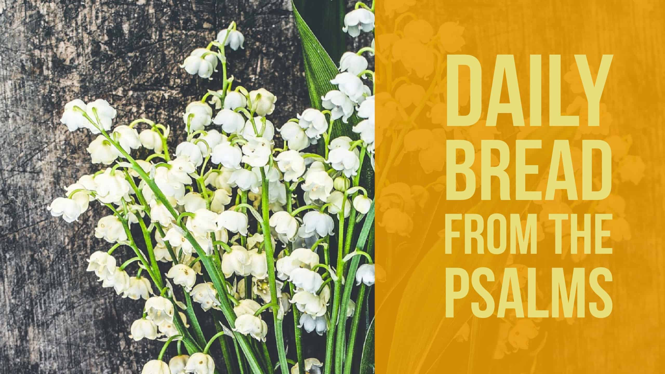 Daily Bread: Thoughts and Prayers from the Book of Psalms Psalm 6 & 7