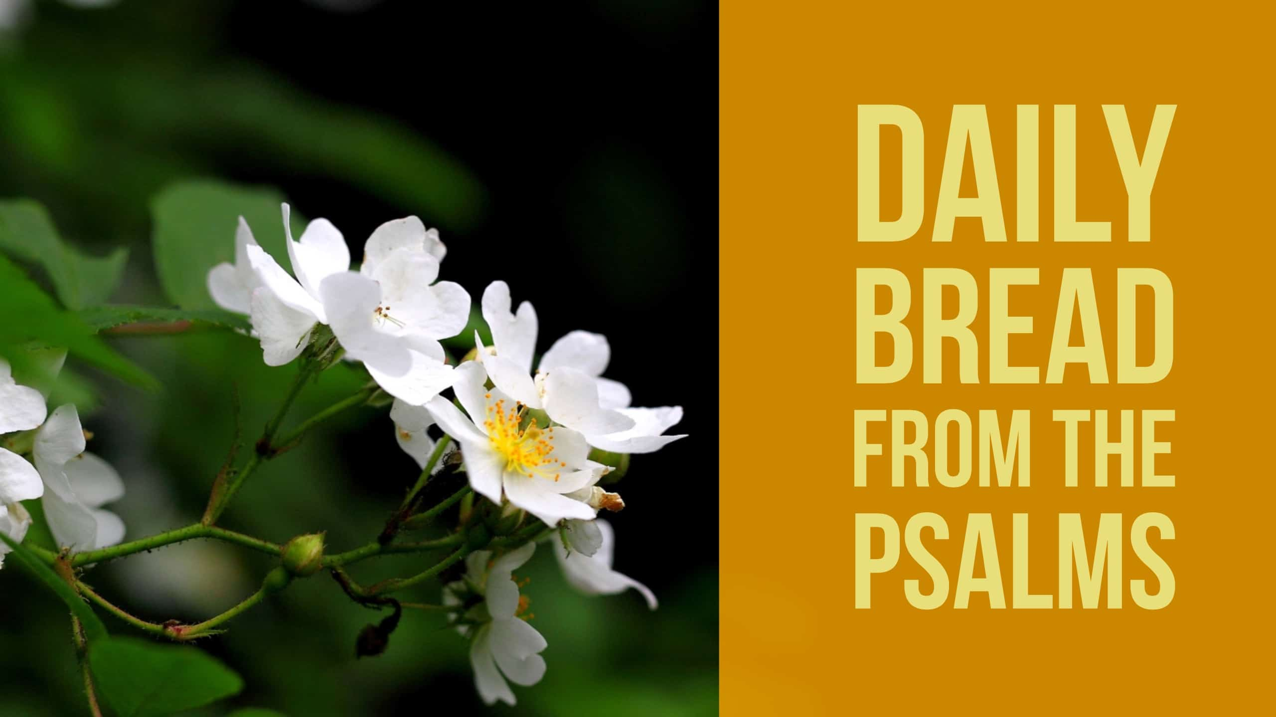 Daily Bread Praying Psalm 10