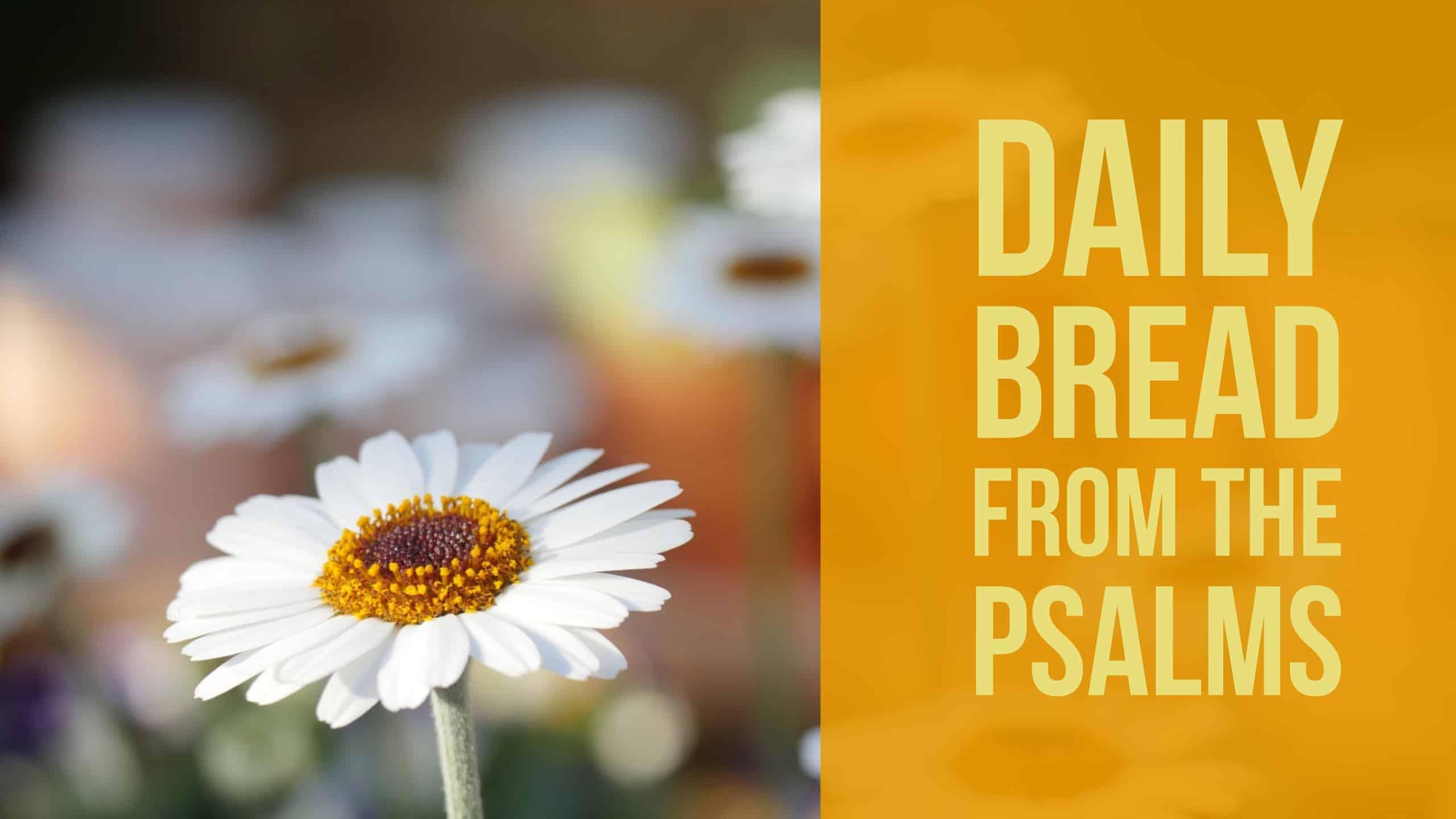Psalm 11, Praying the Psalms (Fields of Daisies)
