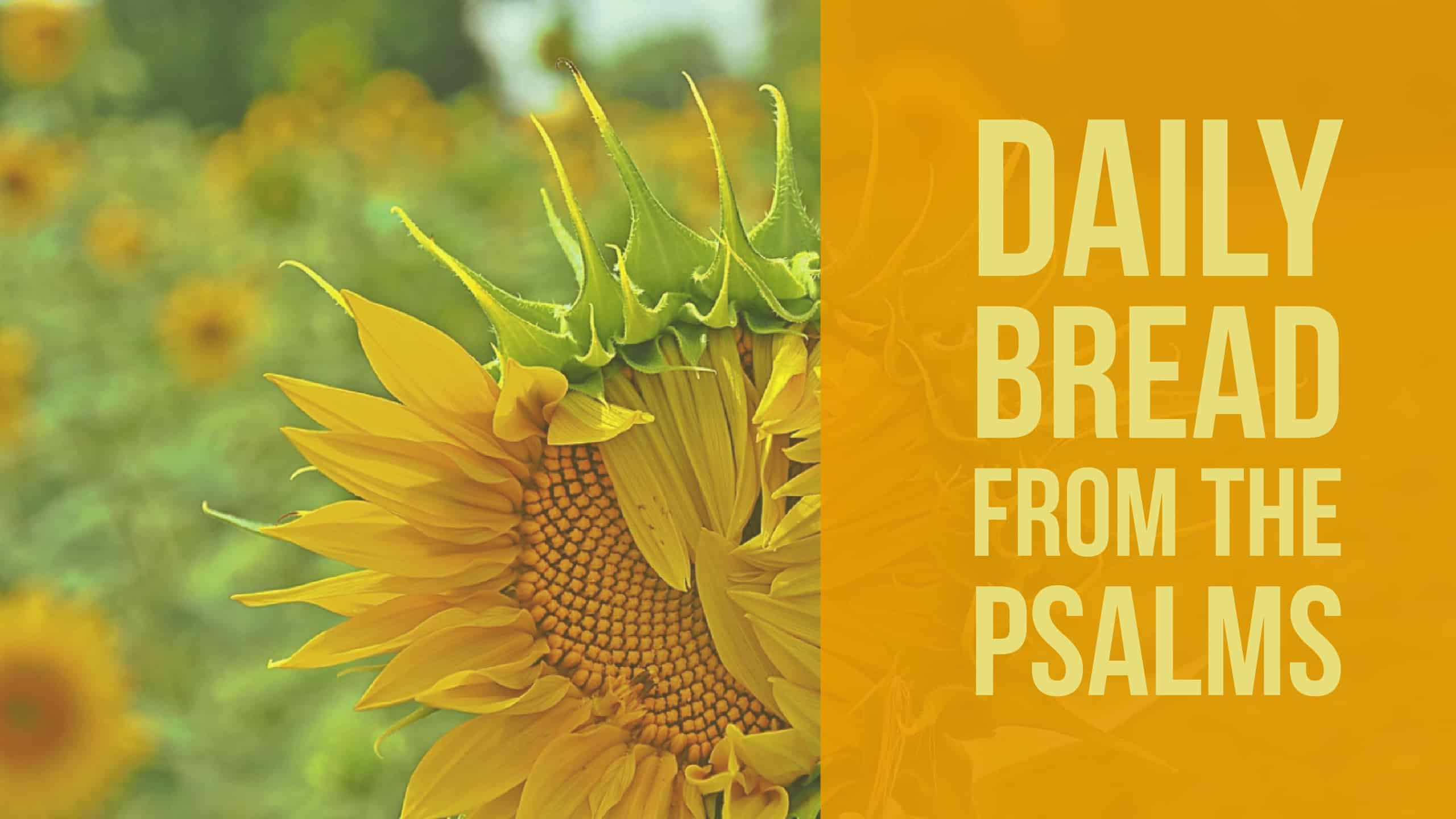 Daily Bread from the Psalms (Psalm 12) - Fields of Daisies