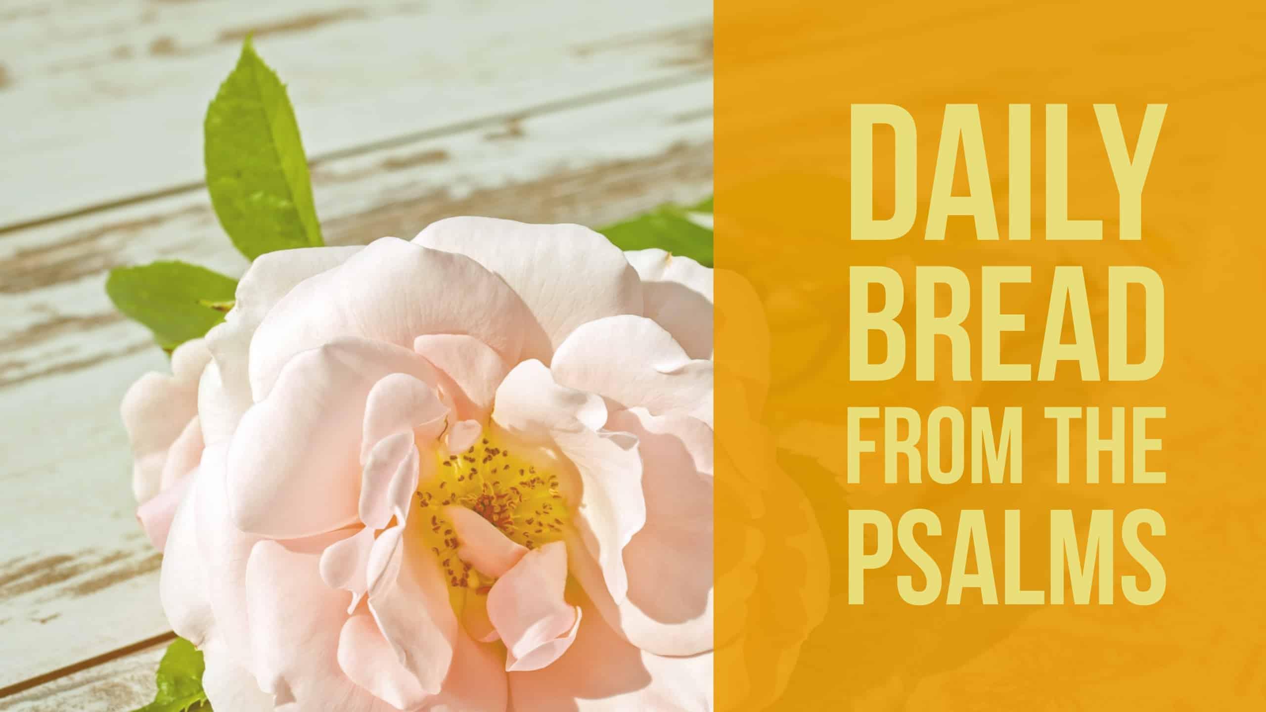 praying psalm 14