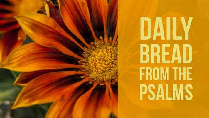praying psalm 22 daily devotional from the Psalms
