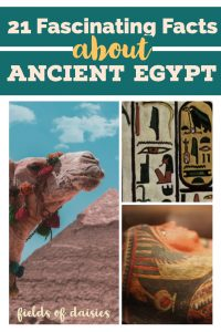 egyptian mummy, pyramid, cartouche, camel ancient egypt history facts