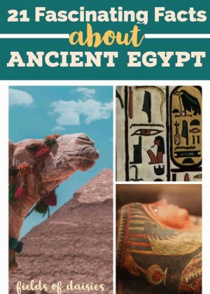 egyptian mummy, pyramid, cartouche, camel